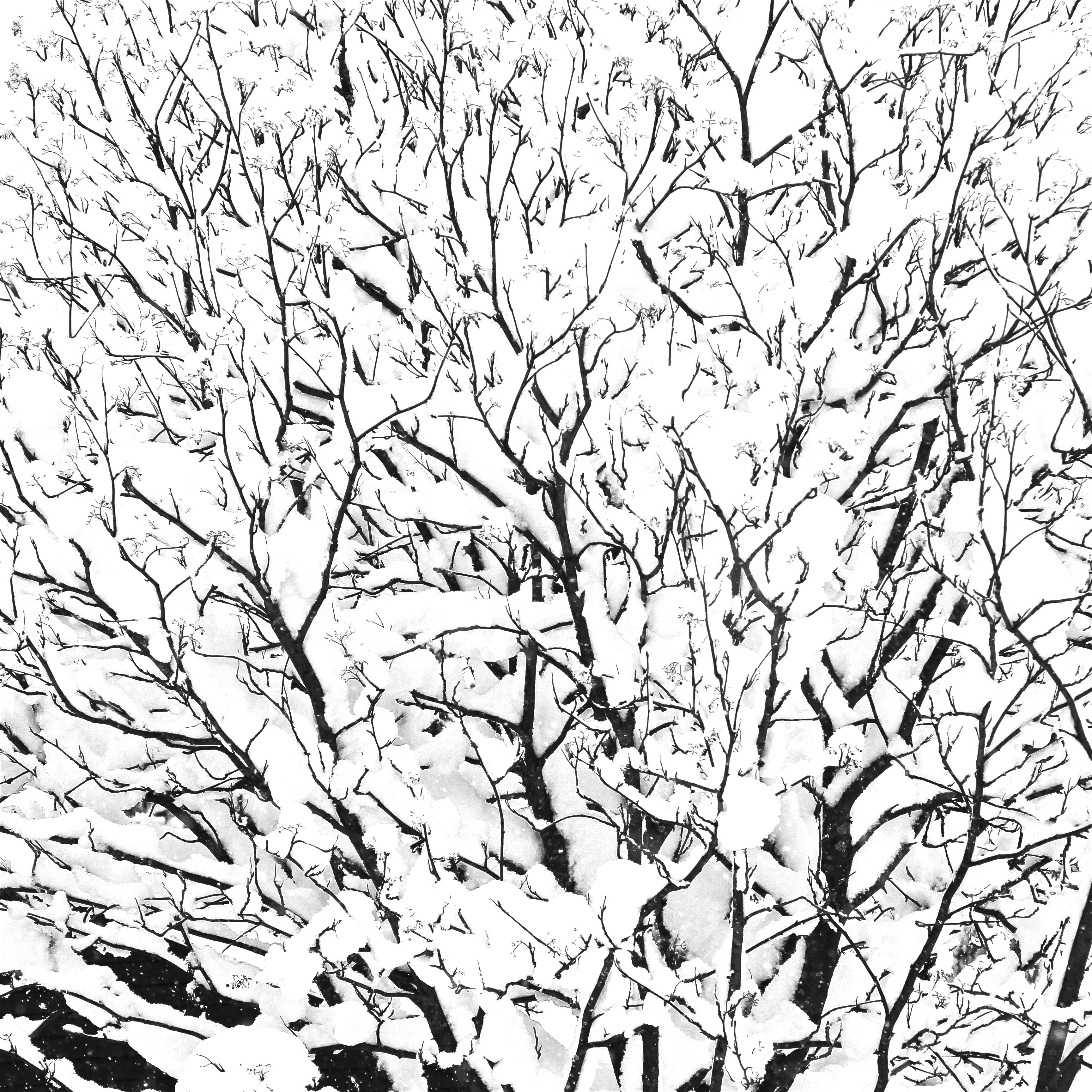 Snow Covered Tree Branches White Textures Natural Pattern