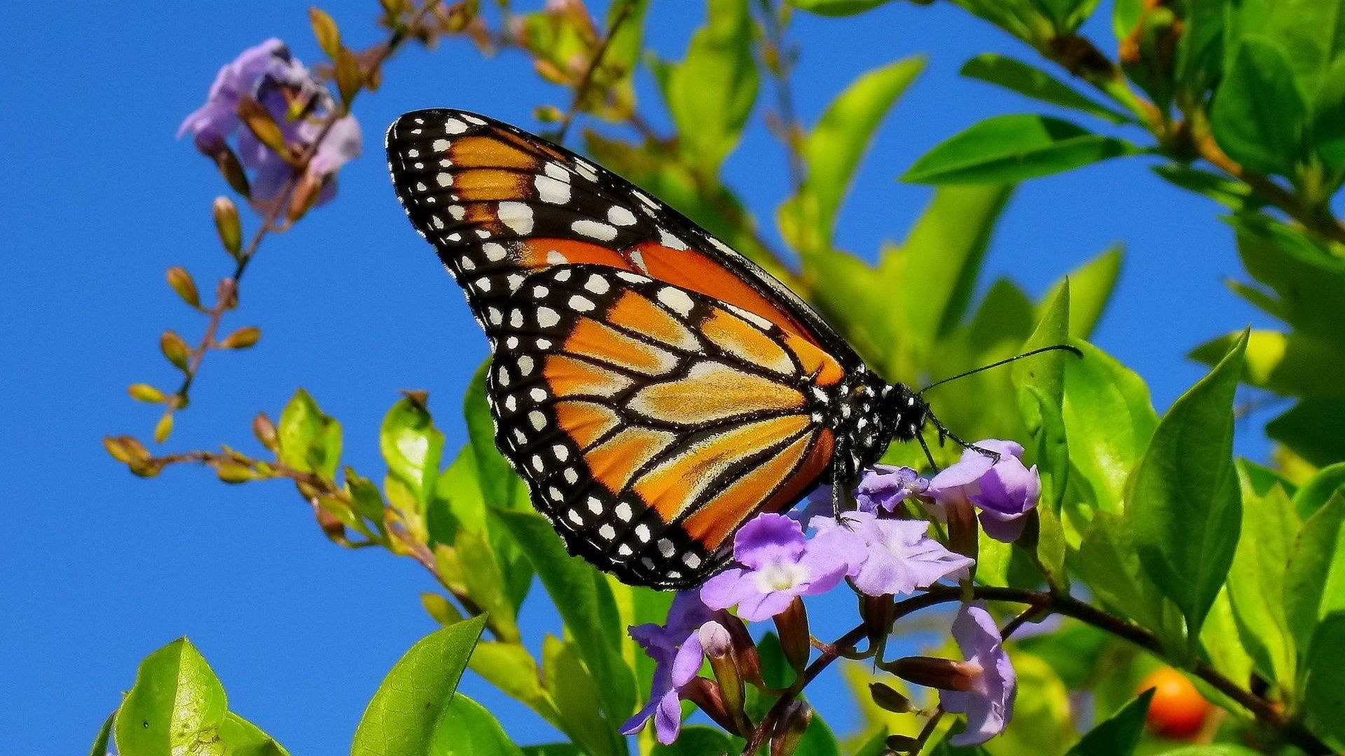 Pictures Of Spring Flowers And Butterflies Hd Wallpapers And