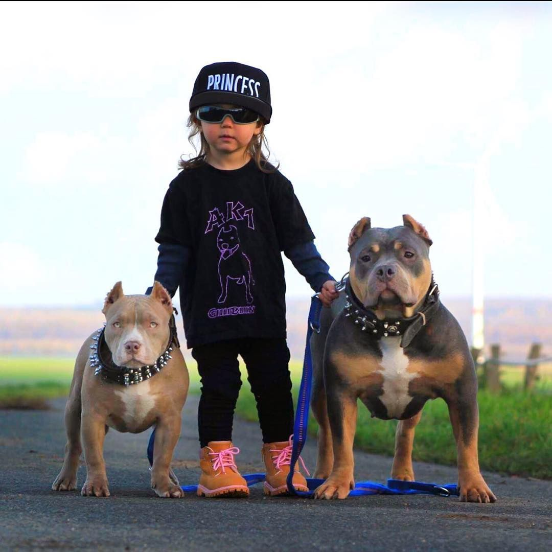 2 743 Likes 44 Comments American Bully Americanbully On Instagram Muzi S Yuma Americanbully Bullybreed Bullyz Badas Bully Dog Baby Dogs Pitbulls