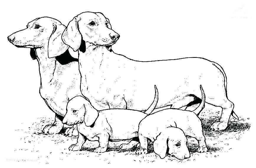 Realistic Animal Coloring Pages Dog Packed With Printable