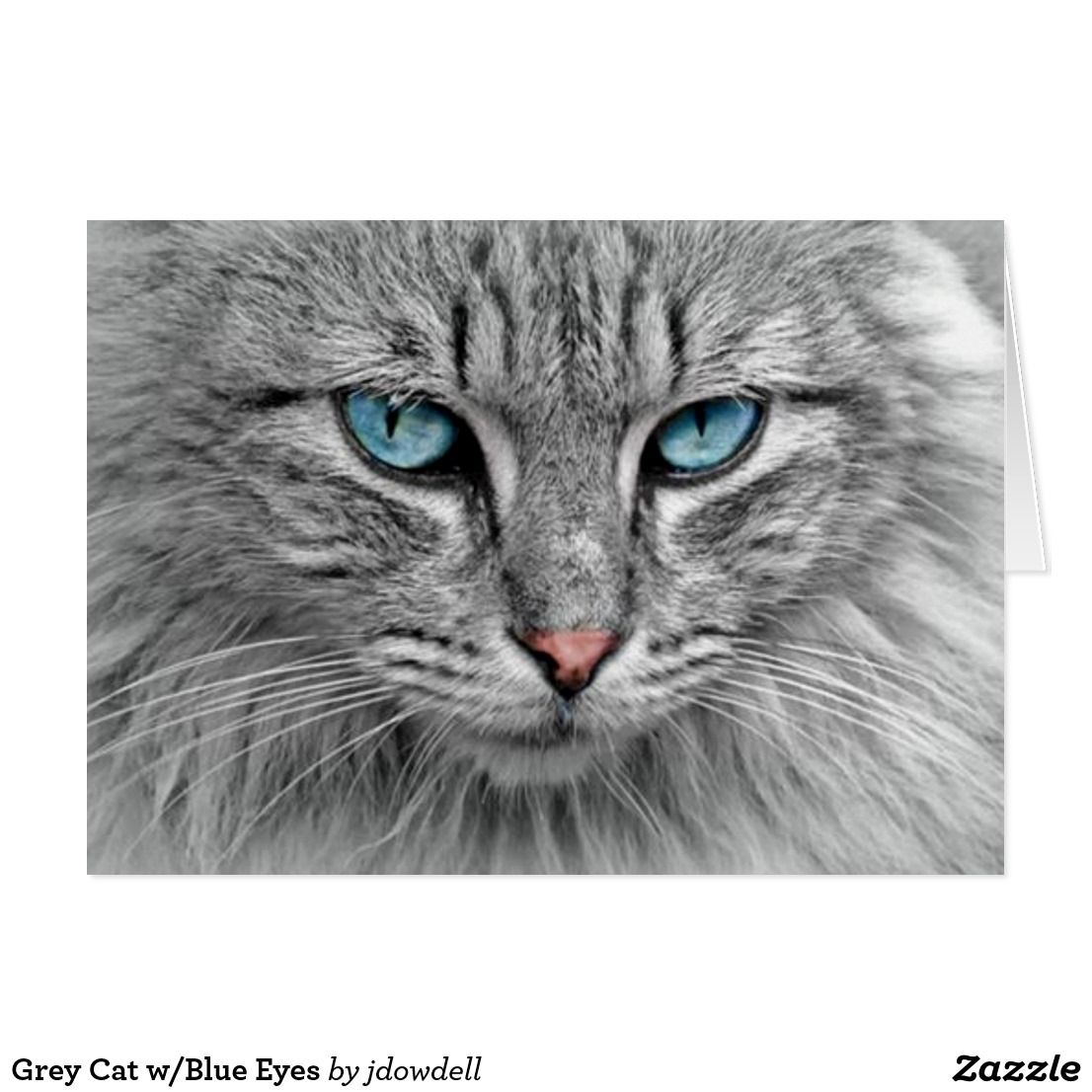 Grey Cat w Blue Eyes Card My Zazzle Site Pinterest