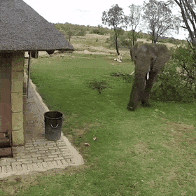 An elephant was caught finding up trash and throwing it into a trash can on a protection camera — astonishing    #awesomepictures #beautful #beautifull #performance #thingsilove