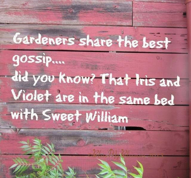 Gardeners share the best gossip... did you know? That Iris and Violet are in the same bed as Sweet William.