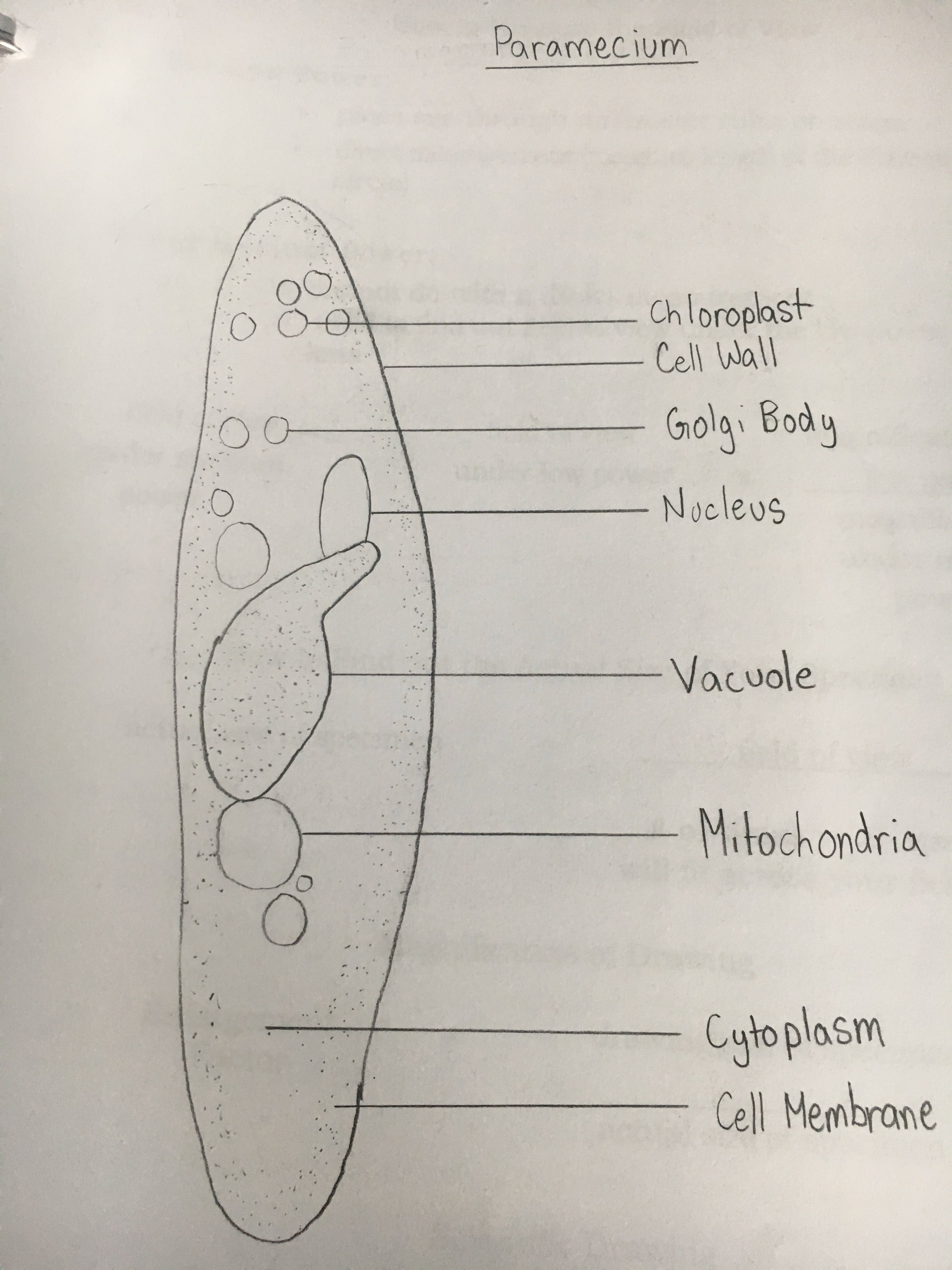This Is A Scientific Drawing I Made Of A Paramecium This Relates To The Big Idea Of Biology That Plants Cell Diagram Plant And Animal Cells Scientific Drawing