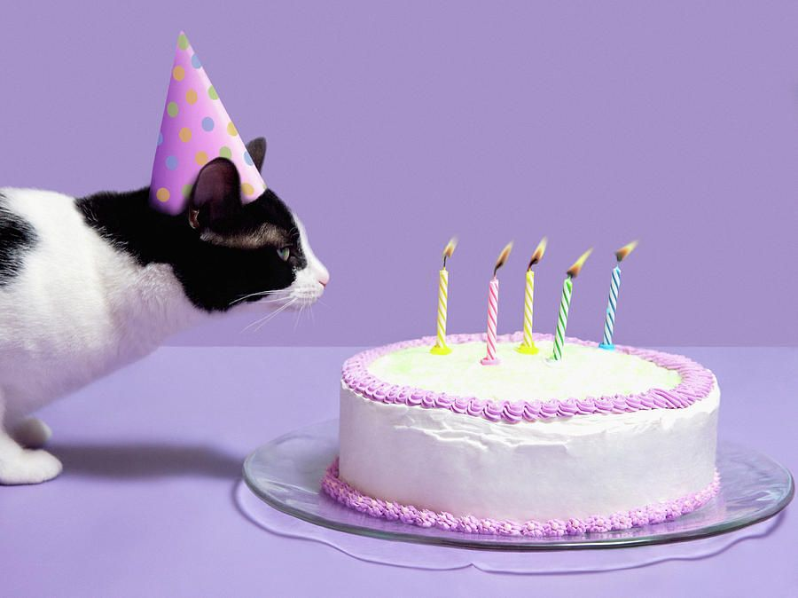 Even Your Kitty Cat Might Be Curious Enough To Blow Out The Candles Make A Cake For With Tuna And Treats