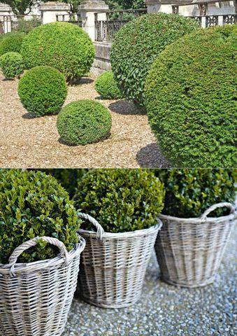 No cerramos en agosto flores y plantas artificiales for Arbustos para macetas exterior