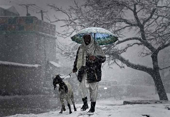 Winter storm: An Afghan man walks with his goat in Kabul