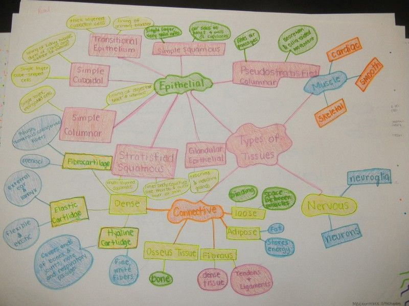 Human Tissue Concept Map.Concept Map Science Pinterest Anatomy And Physiology Anatomy