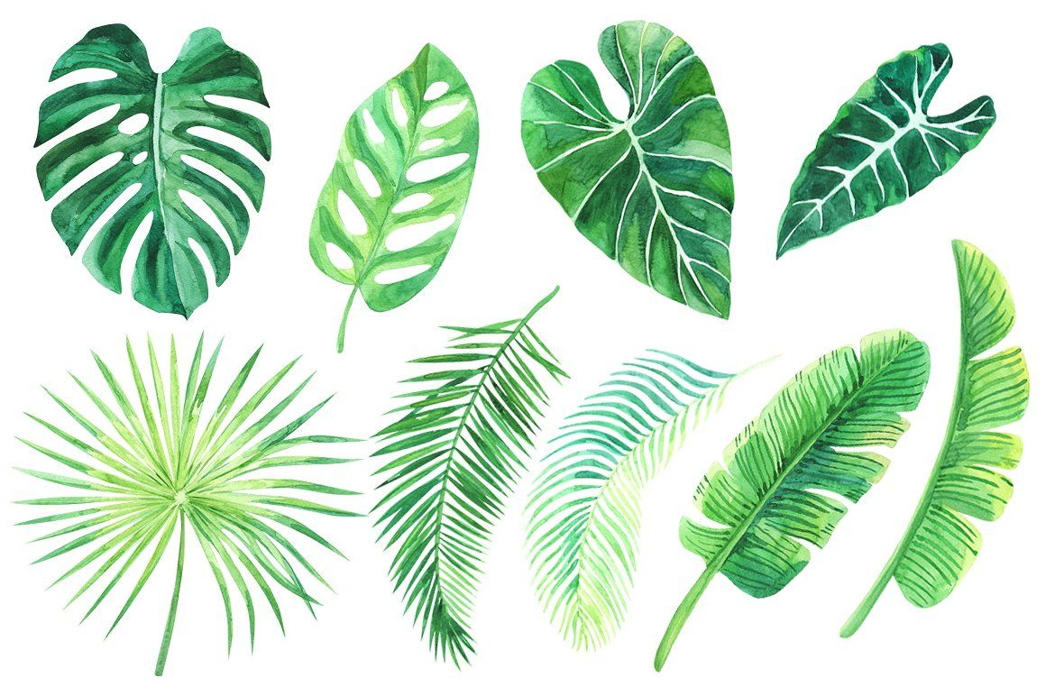 Tropical Leaves Watercolor Clip Art Includes Set Enjoy Png