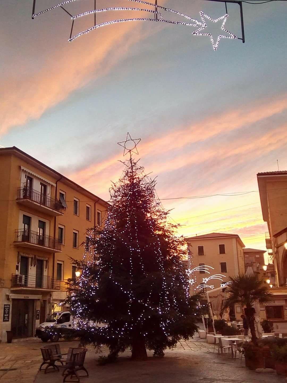 Fiori Gialli Isola Delba.Alba Di Natale Isola D Elba Toscana Italia Toscana Italia