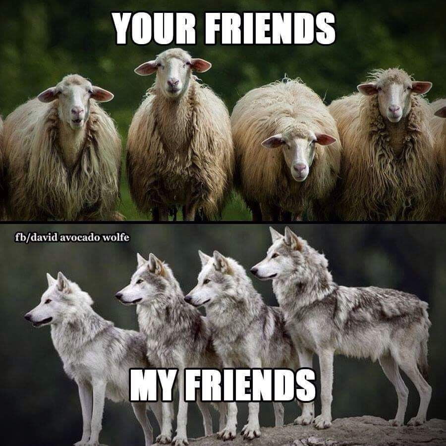 Welcome To The Wolf Pack Meme