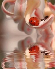 Summer love..lady bug and an ant.