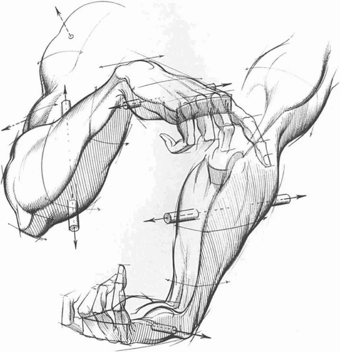 Thicker Part The Palm The Hand | Drawing_Hands | Pinterest | Palm ...