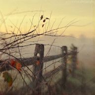 {Rustic fence in the fog}