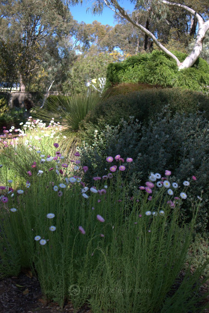 Mallee Design native Australian garden design Servicing North