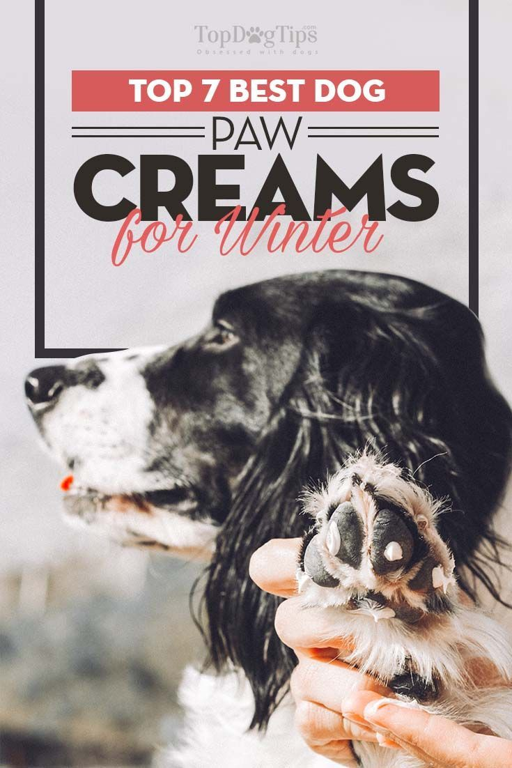 7 Best Dog Paw Cream Products For Winter S Cold Pinterest Care Supplies And Paws