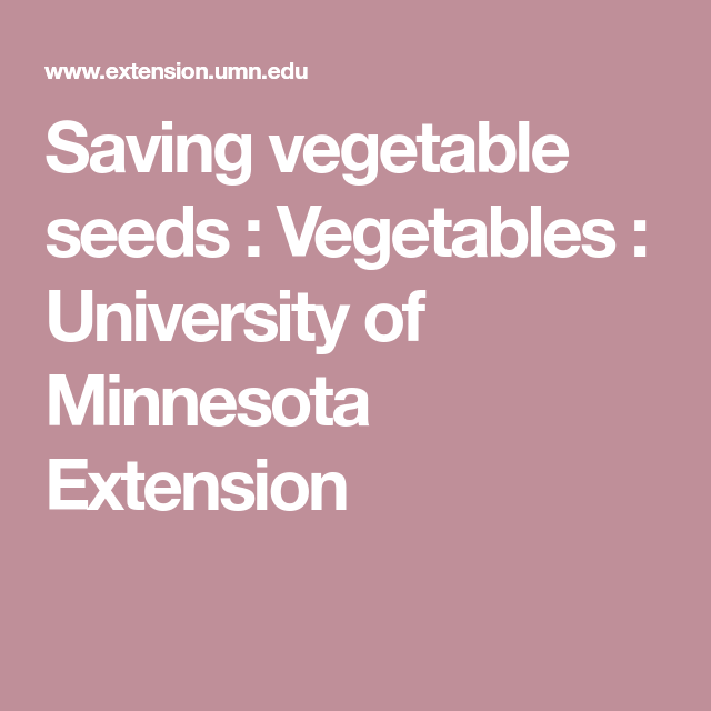 gardens saving vegetable seeds vegetables university of minnesota extension - Vegetable Garden Ideas For Minnesota