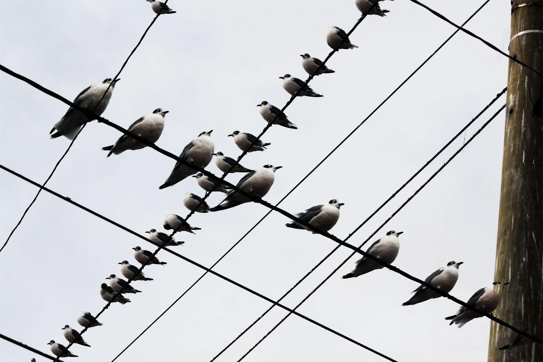 Birds , pasaros -Lima -Peru