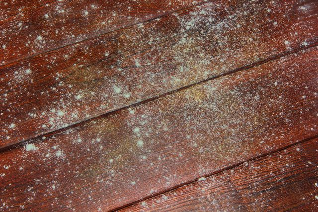 How To Remove Toxic Mold In Your Home Mold Remover On Wood