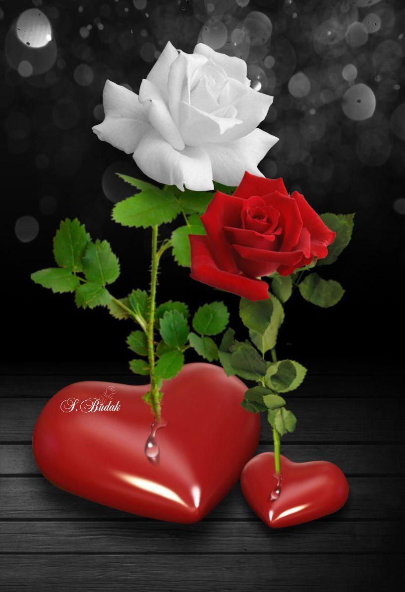 Life Can Be Beautiful Beautiful Roses Beautiful Roses Beautiful Rose Flowers Rose Flower Wallpaper Love romantic heart rose wallpaper hd