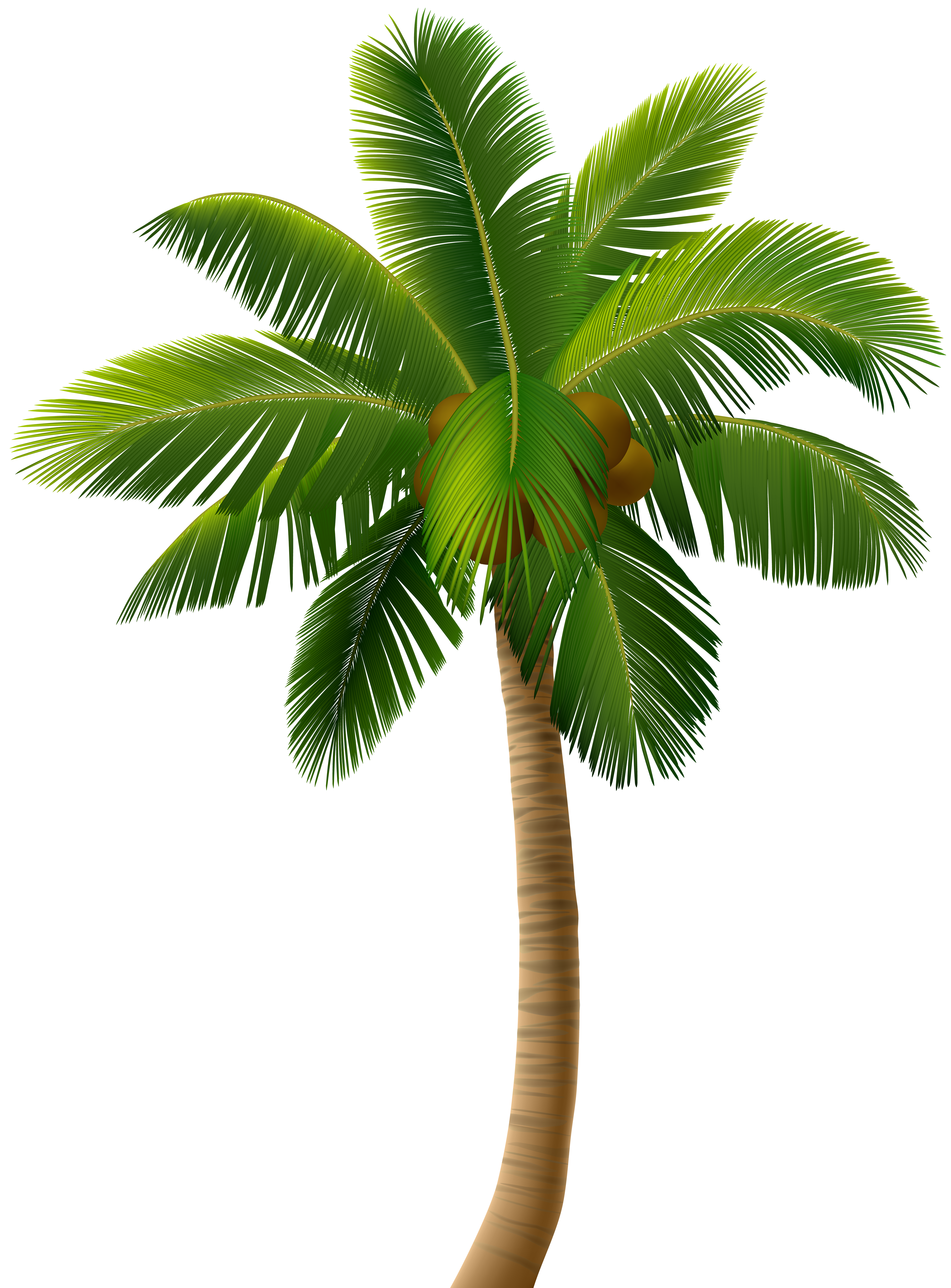 Palm Tree Png Clip Art Image Gallery Yopriceville High Quality Images And Transparent Png Free Clipart Palm Tree Clip Art Palm Tree Png Palm Tree Pictures