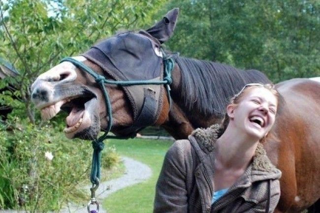 Horsing Around - The Greatest Animal Photobombs of All Time - Photos
