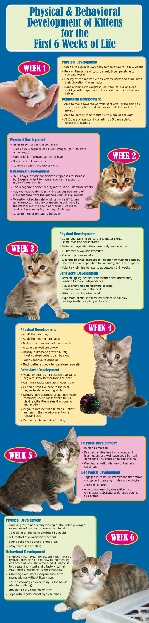 Awesome Pregnant Tips Are Readily Available On Our Internet Site Look At This And You Wont Be Sorry You Did Newborn Kittens Kitten Care Kittens