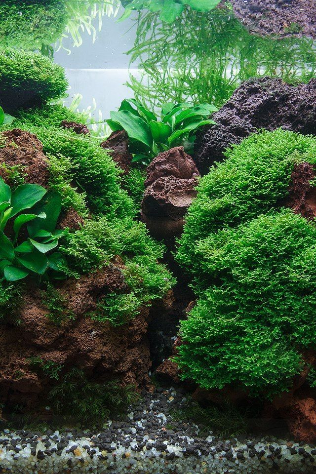 Aquarium- I'm impressed- I usually am tired of the lava ...