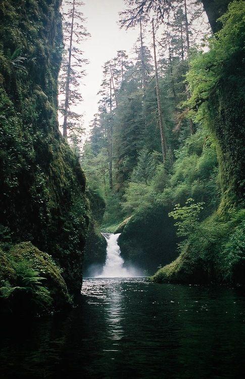 Si cierro los ojos puedo sentir el aire fresco del bosque...