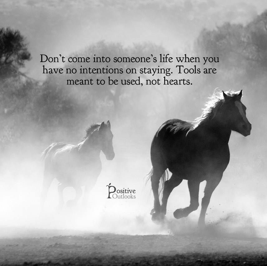 Great sayings image by Dawn Stinson Horses, Horse quotes