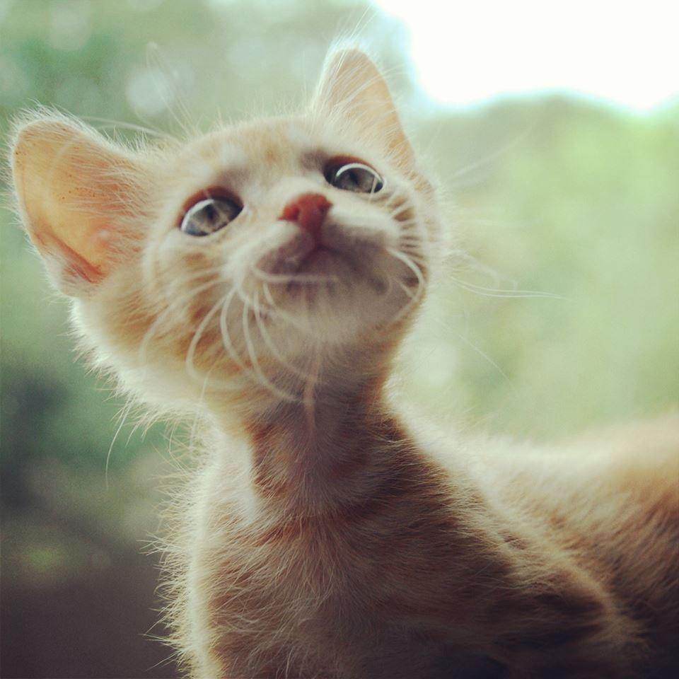 Austin Pets Alive! has a Baby Bottle Kitten Nursery