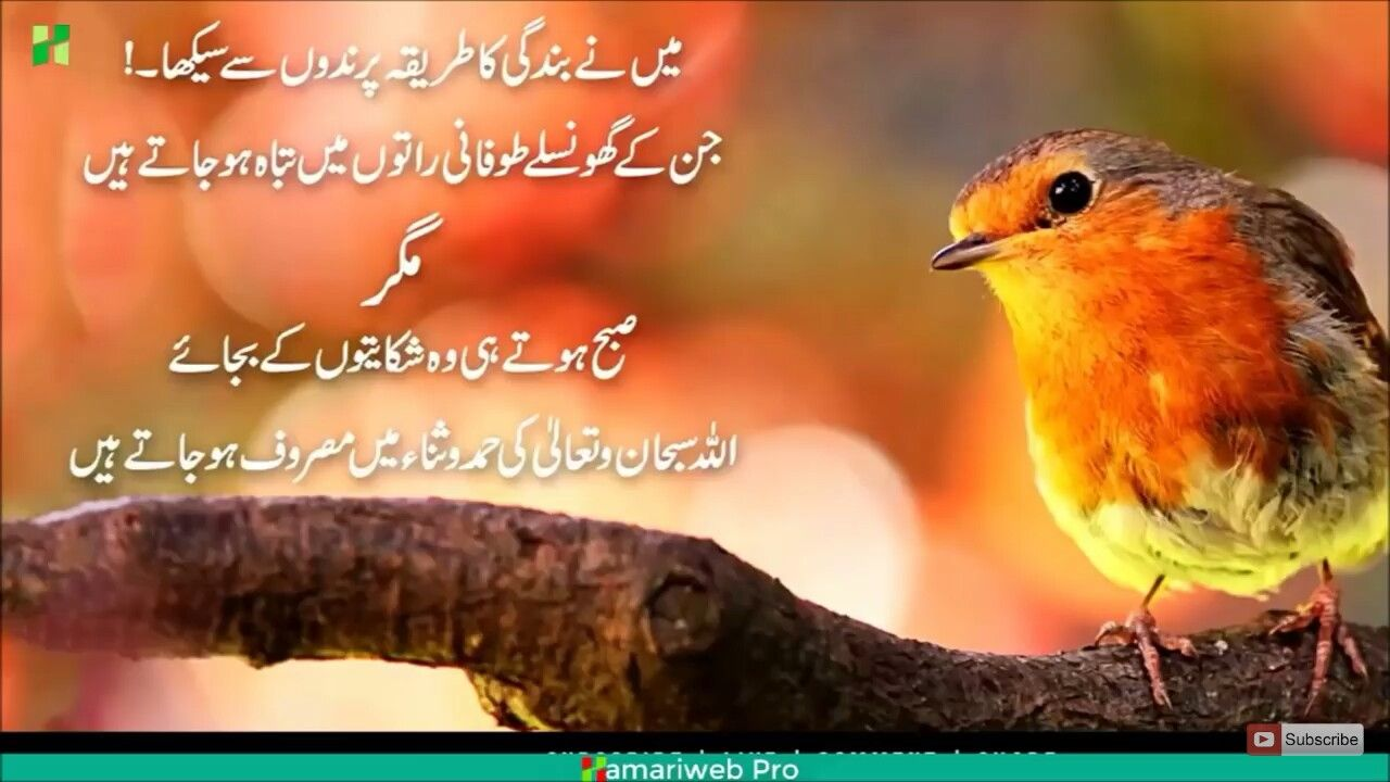 Pin By Dimple Queen On Islamic Wild Bird Store Winter Garden Wild Birds
