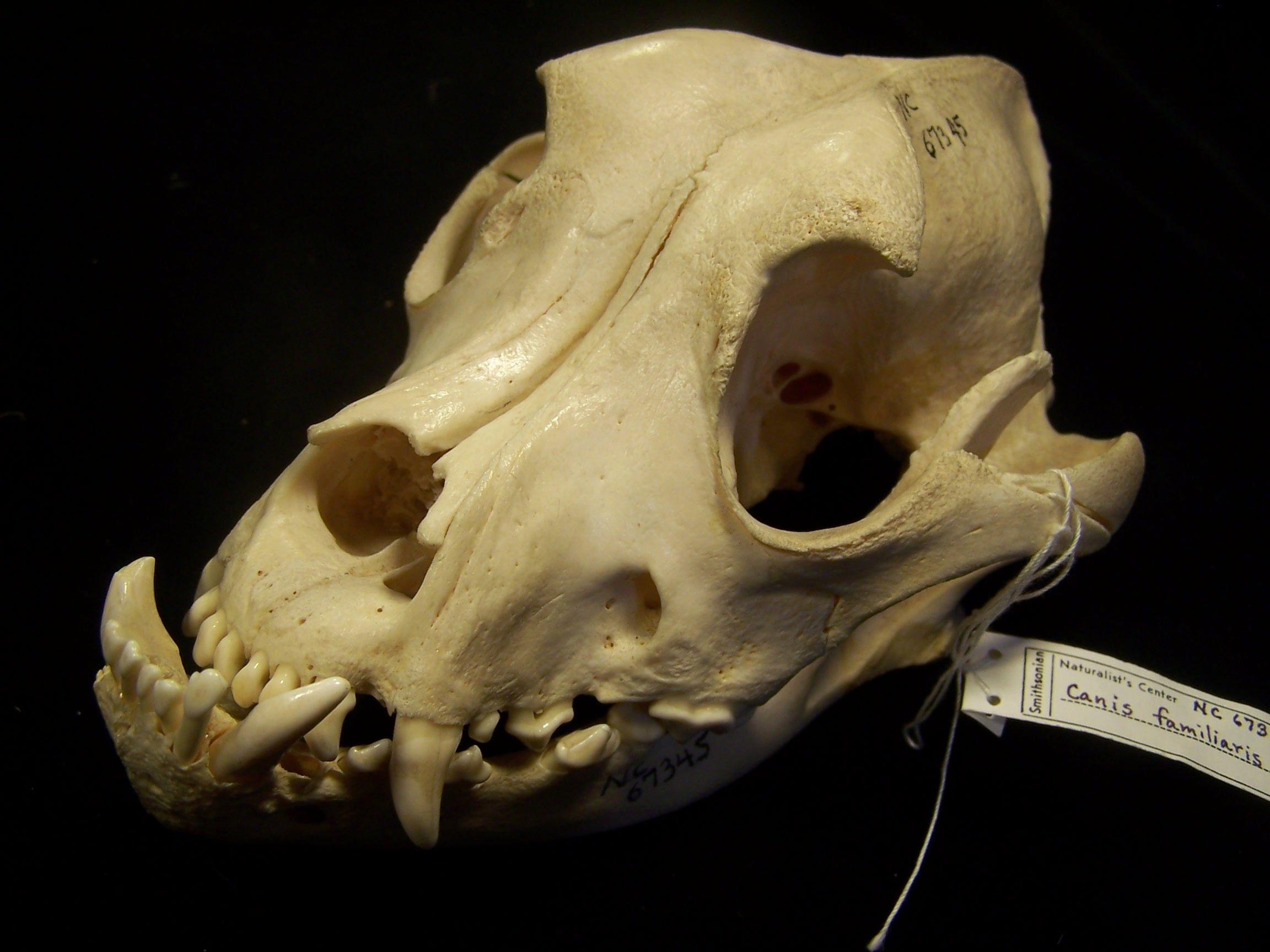 Pin On Skull Skeleton