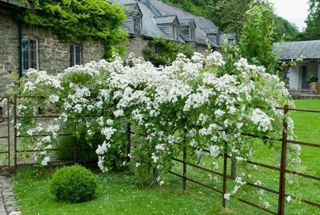 Landscape Design With Knockout Roses #knockoutrosen Rose Plant Care #Rose #knockoutrosen Landscape Design With Knockout Roses #knockoutrosen Rose Plant Care #Rose #knockoutrosen