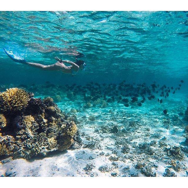 """An amazing #underwater shot by @nikitashmatov. #scuba #diving #scubadiving"" Photo taken by @_scuba_diving_ on Instagram, pinned via the InstaPin iOS App! http://www.instapinapp.com (11/14/2015)"
