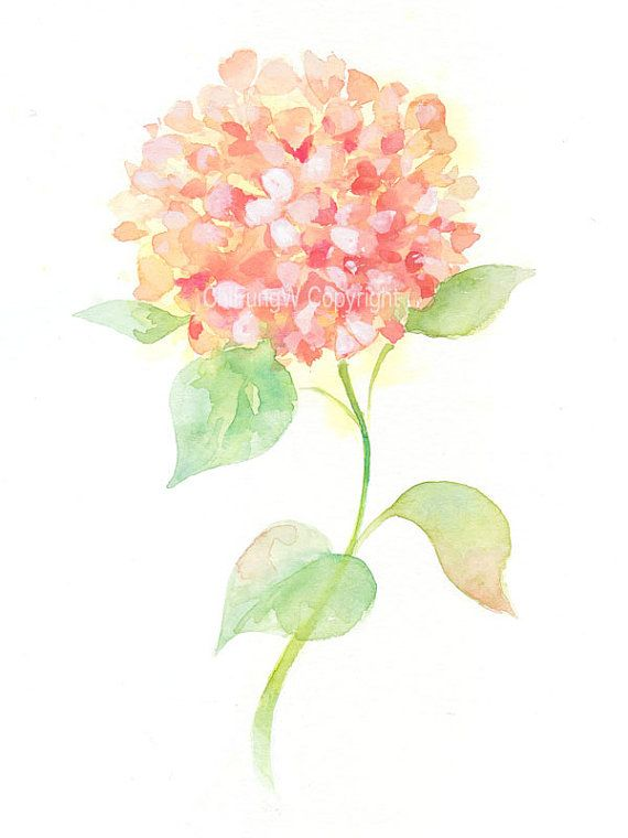 Finish Work Hydrangea U Hortensia Watercolor