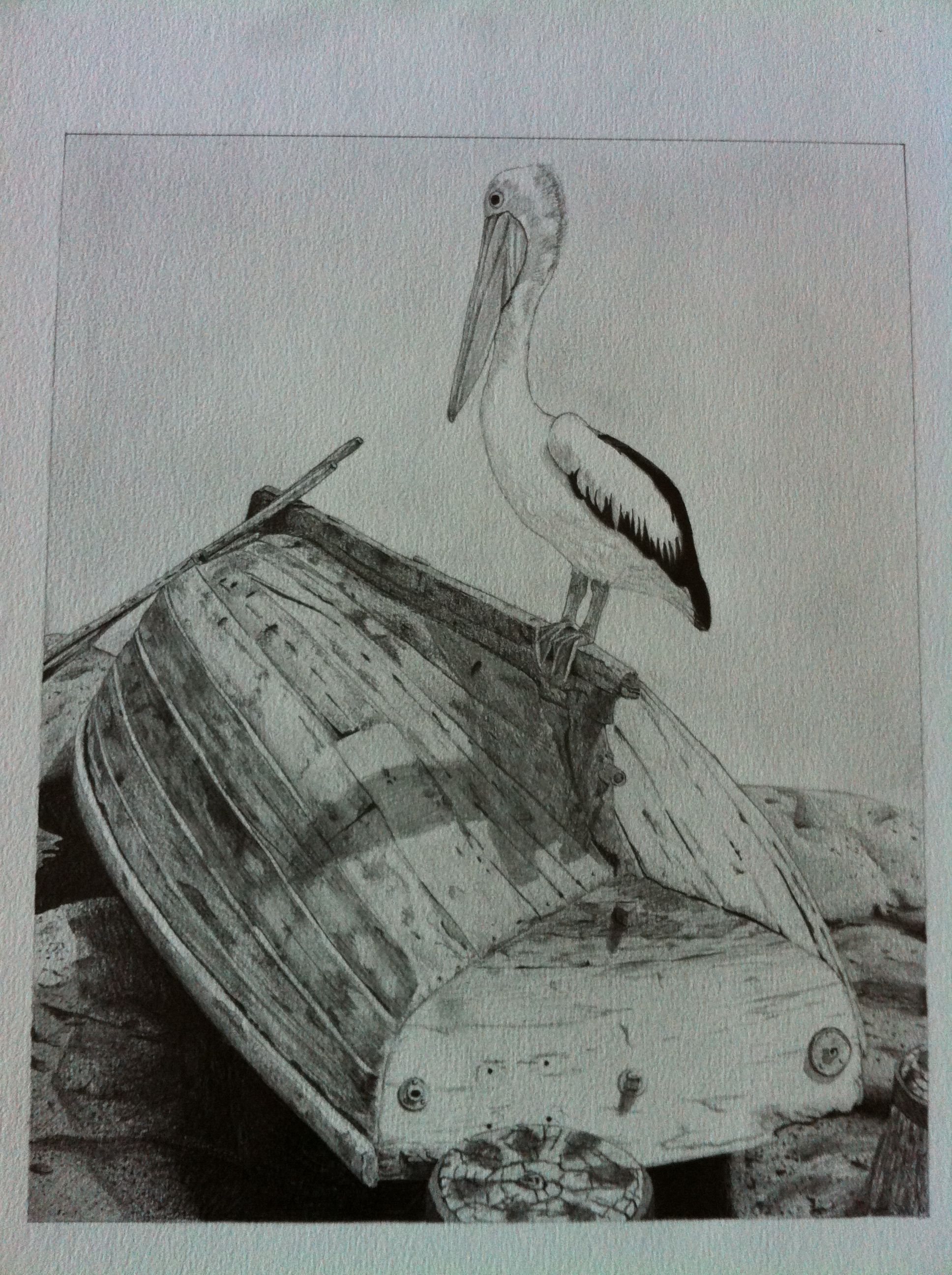 Pencil drawing of pelican on upturned boat original photo taken at a trip to the sydney auatralia zoo