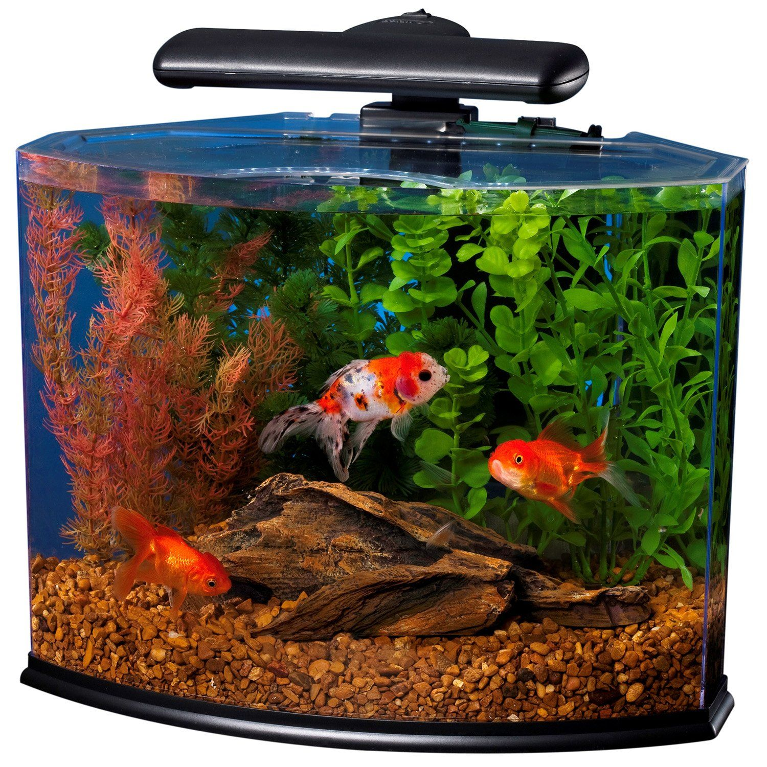 Aquarium fish tank starter kit - Tetra Crescent Desktop Aquarium Kit Petco Store Betta Fish Tankfish