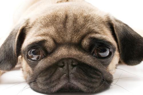 Have You Ever Seen A Dogs Eyes So Sweet Mai Visto Un Cane Dagli