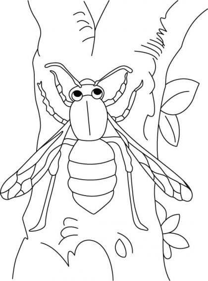 Wasp climbing trunk up coloring pages | Download … | Insects ...