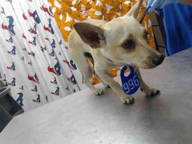 Status Unknown Angel Id A470634 Urgent Harris County Animal Shelter In Houston Texas Adopt Or Foster Animal Shelter Animal Rescue Stories Animals