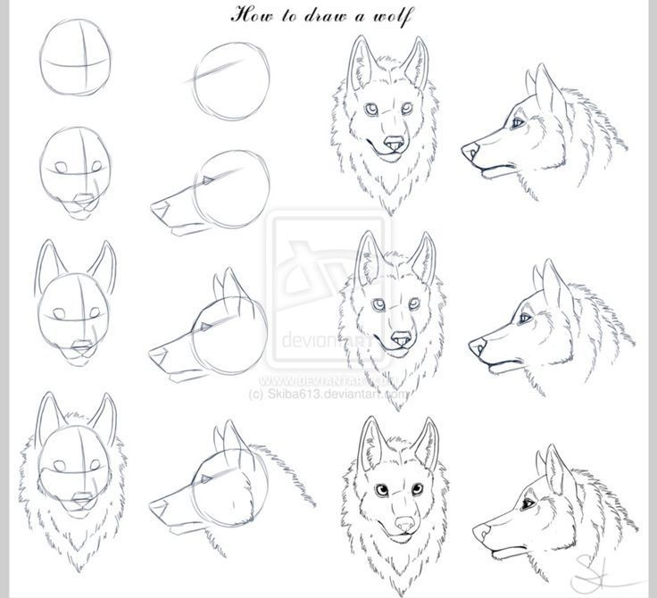 Bildresultat för how to draw a wolf face