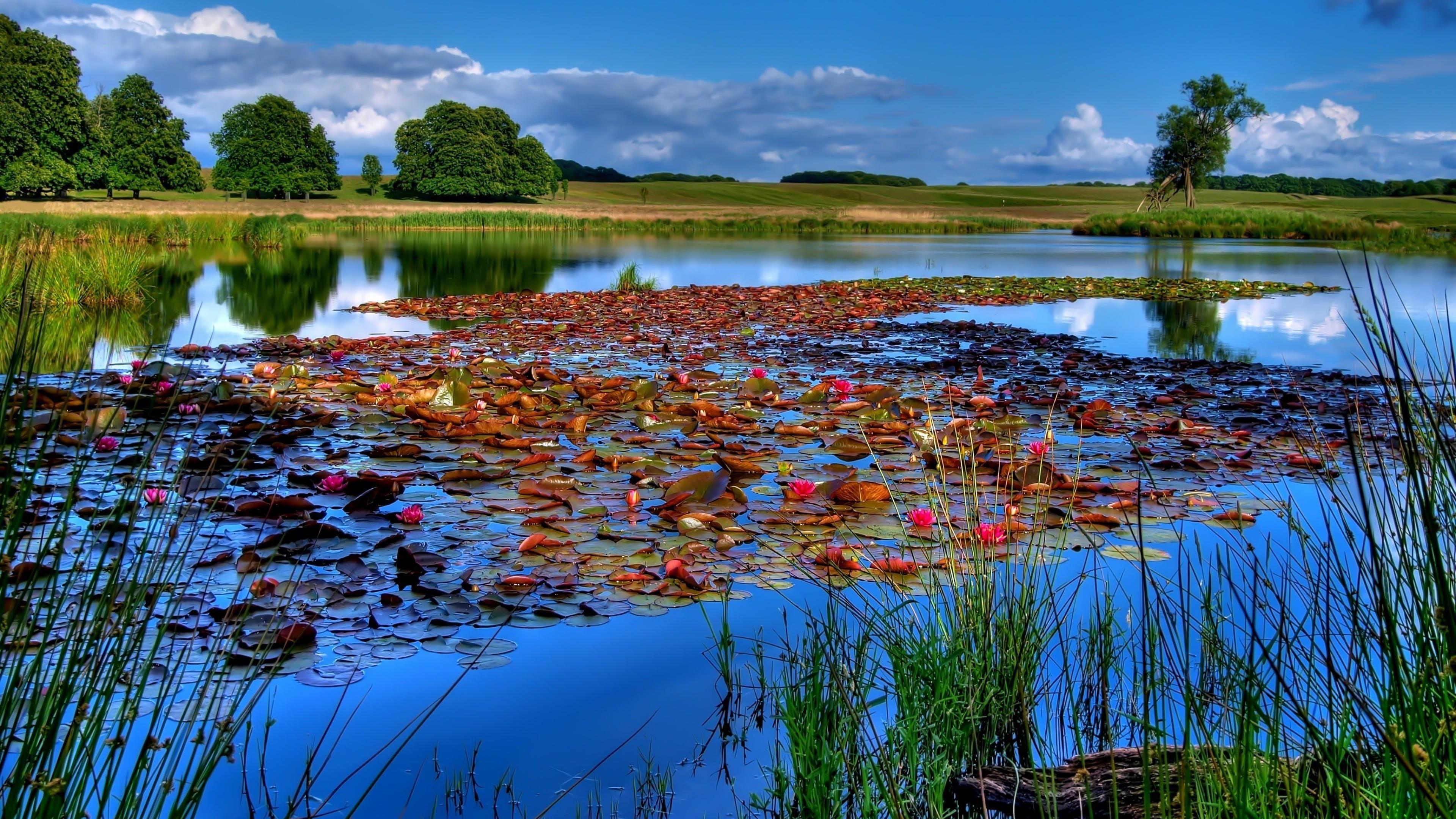 Lily Lake Beautiful Landscape 4k Ultra Hd Wallpaper