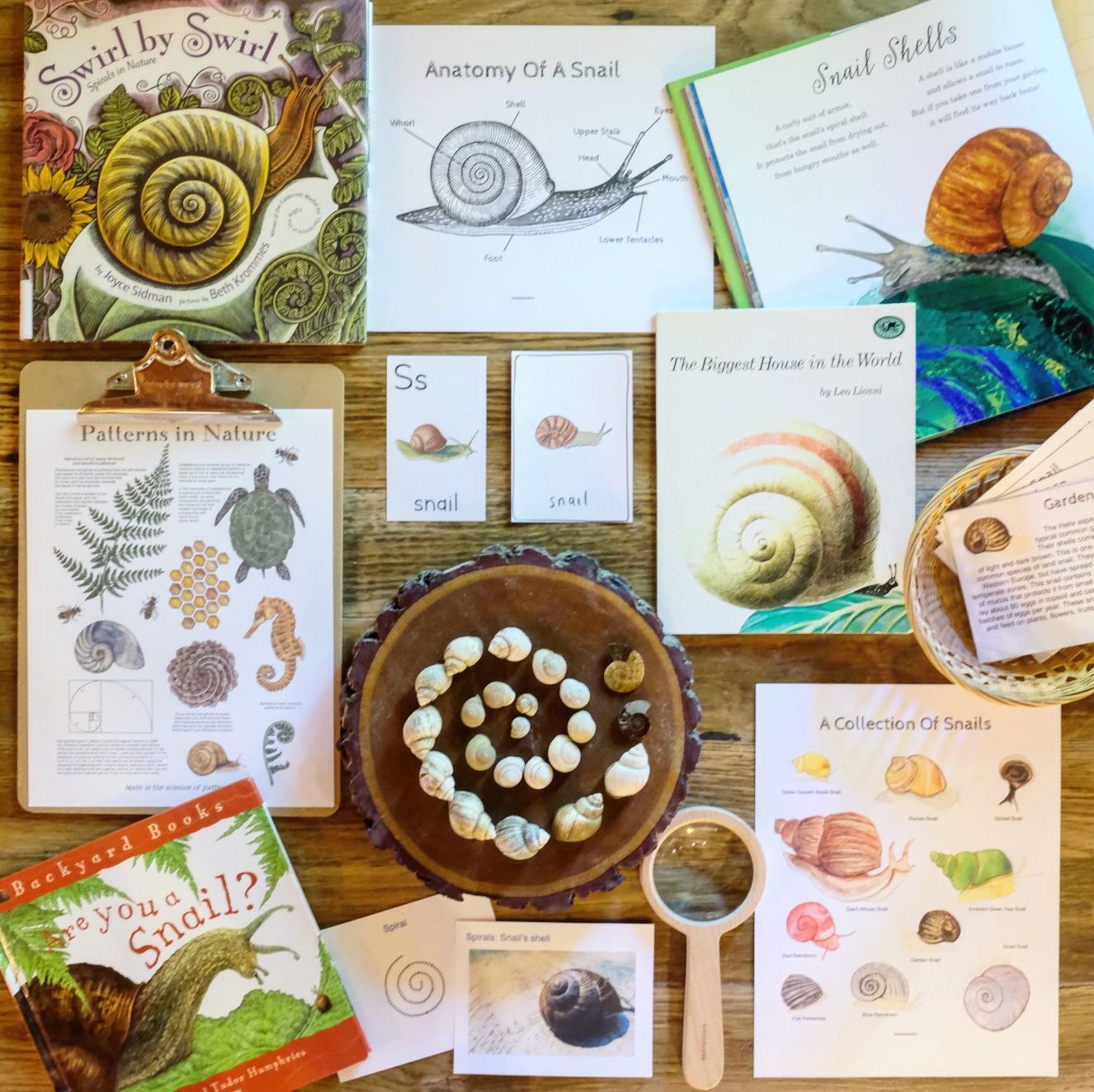 Photo of Snails Nature Study