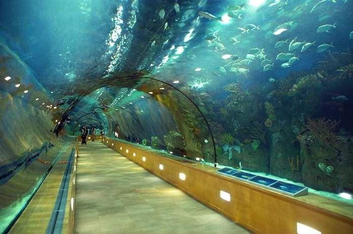 L'Oceanografic World's Best Aquariums