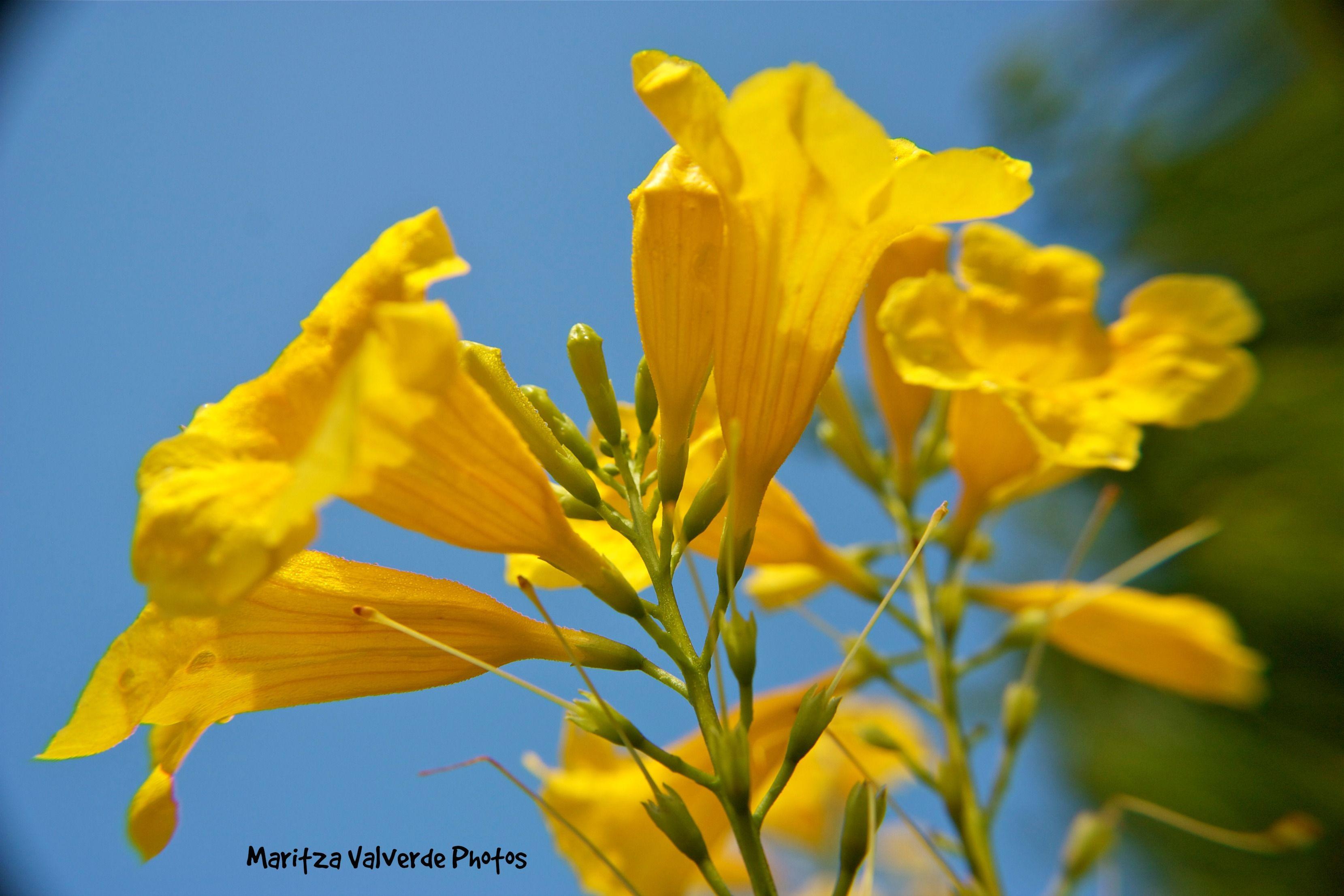 Flor amarlla