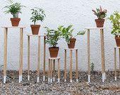 Grande estande de plantas