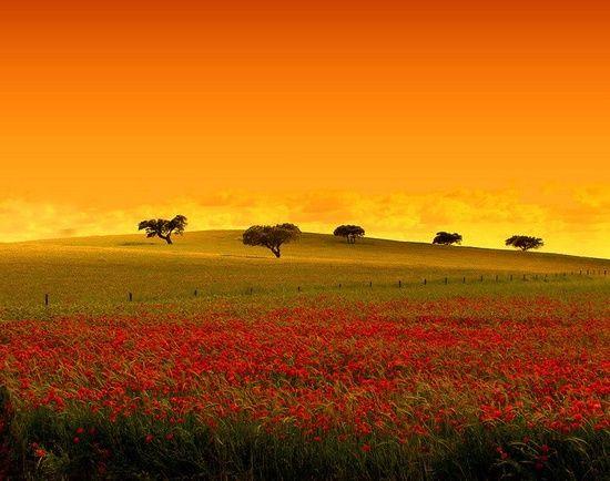 Alentejo Colors Portugal Alentejo Natureza