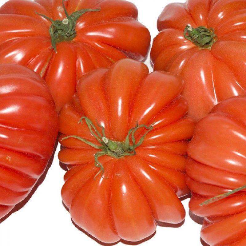 Tomates Corazón De Buey Tomate Semillas Plantas De Tomate