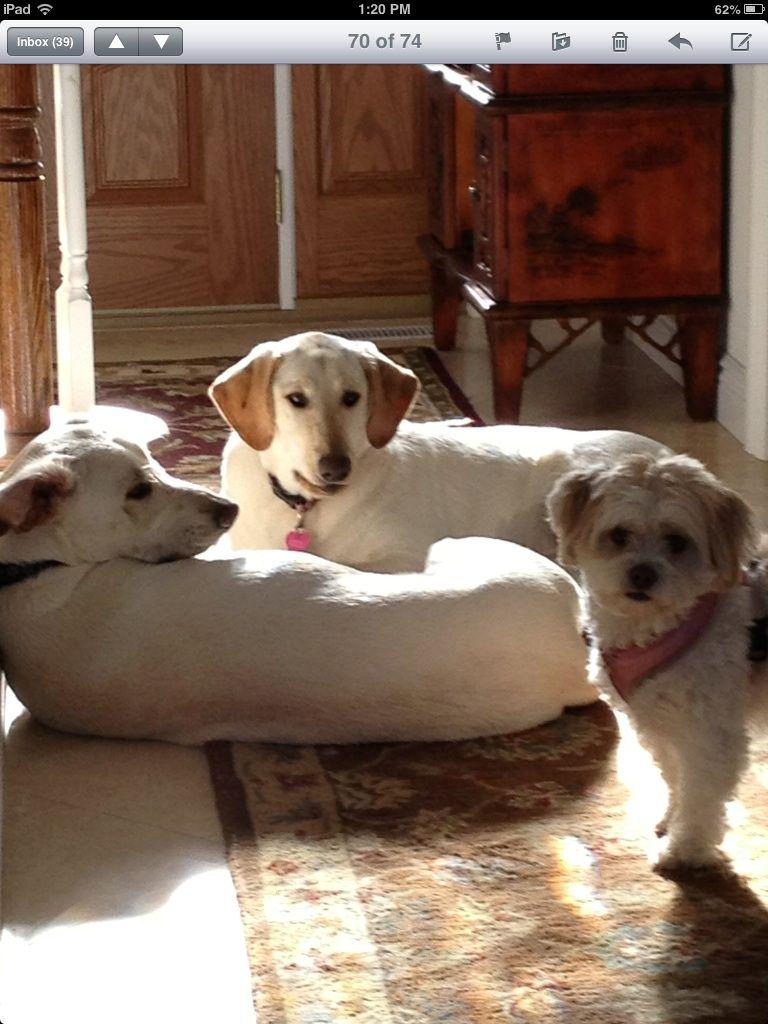 Logan ,Jessie ,Bella
